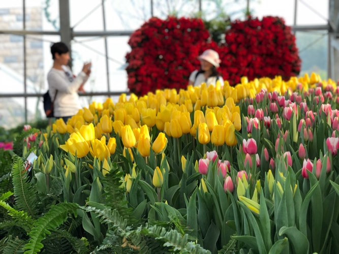 Le plus grand festival de tulipes du Vietnam à Vinpearl Nha Trang